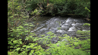 Studies aim to restore habitat of imperiled Northwest fish