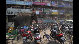 Elephant rampages in east Indian town, smashing homes