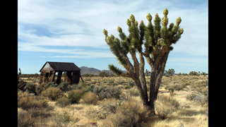 Obama moves to protect 1.8 million acres of Calif. desert