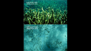 More acidic seawater now dissolving bit of Florida Keys reef