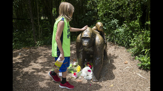 Vigil planned at Cincinnati Zoo in tribute to slain gorilla