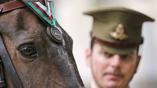 US Marine Corps horse honored for Korean War valor