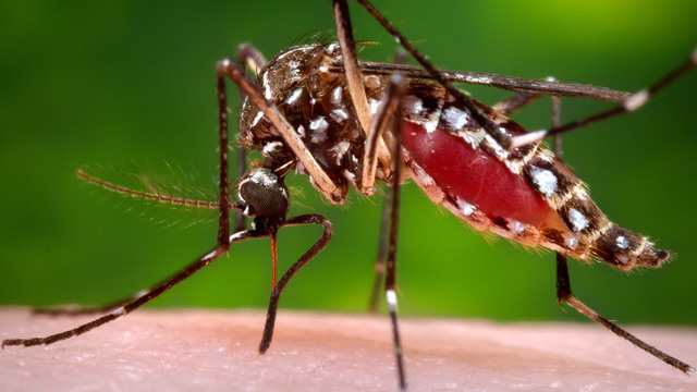 CDC issues Zika travel advisory in Miami for pregnant women