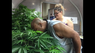 Oregon fair generates buzz with 1st legal pot display in US