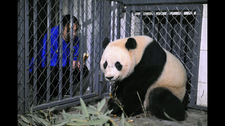 US-born panda Bao Bao lands in China after leaving DC zoo