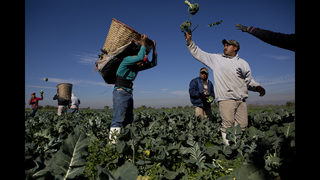 In Mexico, fears a new plant will kill wastewater farming
