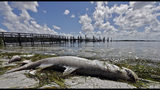 Truth Test: Is Gov. Rick Scott responsible for Red Tide? New ad claims just that