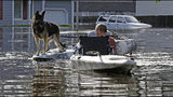 A man tries to get his dog out of a flooded neighborhood in Lumberton, N.C., Monday, Sept. 17, 2018, in the aftermath of Hurricane Florence. (AP Photo/Gerry Broome)
