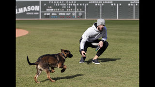 World Series Bark Park: Porcello