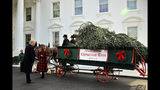 President Donald Trump and first lady Melania Trump receive the White House Christmas Tree at the North Portico of the White House, in Washington, Monday, Nov. 19, 2018. The North Carolina-grown 19 1/2-foot-tall Fraser Fir will be displayed in the Blue Room of the White House. (AP Photo/Manuel Balce Ceneta)