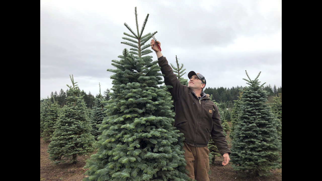 ... home depot s holiday preview a few weeks back charlie brown tree · the 17 best artificial christmas ...