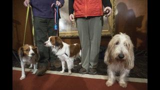 Kooiker-huh? An intro to Westminster dog show