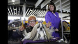 A dog is groomed at the Westminster Kennel Club Dog Show, Monday, Feb. 11, 2019, in New York. (AP Photo/Nat Castaneda)
