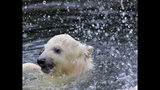 A female polar bear baby swims in its enclosure at the Tierpark zoo in Berlin, Friday, March 15, 2019. The still unnamed bear, born Dec. 1, 2018 at the Tierpark, is presented to the public for the first time. (AP Photo/Markus Schreiber)