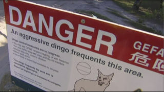 Rescuers: Dad saved toddler from dingo attack in Australia