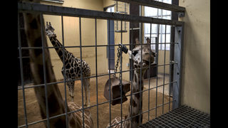 Animal rights activists score win at Barcelona zoo