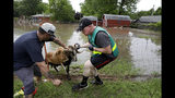 Volunteer Nathan Gustafson, right, and an unidentified man rescue a sheep from floodwaters at a home in the Town and Country neighborhood in Sand Springs, Okla., Thursday, May 23, 2019. (Mike Simons/Tulsa World via AP)