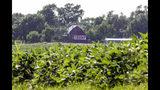 El establo de una plantación de soja de Ashland, Nebraska, muestra un cartel de apoyo a Donald Trump el 24 de julio del 2018. El entusiasmo del mandatario con los aranceles a las importaciones preocupa al empresariado estadounidense, tradicional aliado de los republicanos pero que siempre defendió el libre comercio y condenó el proteccionismo. (AP Photo/Nati Harnik, File)