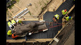 Workers move a 25,000-pound Sphinx of Ramses II at the Penn Museum in Philadelphia, Wednesday, June 12, 2019. The 3,000-year-old sphinx is being relocated from the Egypt Gallery where it's resided since 1926 to a featured location in the museum's new entrance hall. (AP Photo/Matt Rourke)