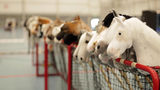Dozens of hobby horses are lined up ready to be ridden during the 8th Hobby Horse championships in Seinajoki, Finland on Saturday, June 15, 2019. More than 400 hobby horse enthusiasts took part in the show, competing on stylish toy horses in various events inspired by real equestrian events. (AP Photo/from APTN Video)