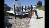 FILE- In this Oct. 3, 2018 file photo, dead fish float caused by red tide in Mexico Beach, Fla. Florida is creating a public-private partnership to research how to control and alleviate red tide blooms. Republican Gov. Ron DeSantis signed a bill Thursday, June 20, 2019. that establishes a partnership between the Florida Fish and Wildlife Conservation Commission and Mote Marine Laboratory to research the blooms that have killed wildlife, caused respiratory problems and hurt tourism. (Patti Blake/News Herald via AP, File)