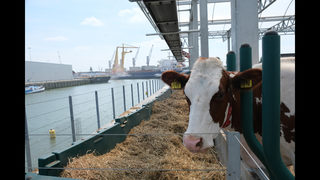 Dutch farm floats possibilities of urban dairy production