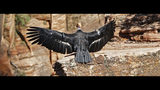 In this May 13, 2019 photo provided by the National Park Service is a female condor in Zion National Park, Utah. Biologists have confirmed that this female California condor laid an egg that has hatched and there is a new baby condor at Zion National Park in southwest Utah. Park rangers said Thursday, July 11, 2019, they estimate the California condor hatched in May, nestled in a crevice of a sweeping red-rock cliff. (National Park Service via AP)