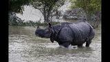 Un rinoceronte camina por una zona inundada en el santuario de vida salvaje de Pobitora, en el este de Gauhati, India, el 19 de julio de 2019. (AP Foto/Anupam Nath)