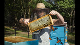 In this June 4, 2019 photo, Leigh-Kathryn Bonner, founder of Bee Downtown, takes a frame from their newest installation of hives at Parmer RTP, one of many corporate campuses who welcome Bonner and her bees to enrich their work environments in Research Triangle Park, N.C. (Casey Toth/The News & Observer via AP)