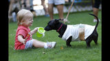 "Stella Jones, a 17-month old Atlanta resident, plays with Kira, a dog dressed as a Starbucks coffee cup, at Doggy Con in Woodruff Park, Saturday, Aug. 17, 2019, in Atlanta. Kira's owner Tali Higgins dressed like a Starbucks barista. ""I like coffee and my dogs are super sweet, so I thought it was a good fit,"" Higgins said. (AP Photo/Andrea Smith)"