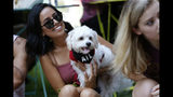 Doggy Con spectators watch dogs in costume prance through Woodruff Park during the pet parade, Saturday, Aug. 17, 2019, in Atlanta. Doggy Con is a local event inspired by the internationally known Dragon Con pop culture convention. (AP Photo/Andrea Smith)
