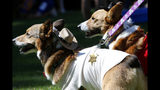 Two dogs wear coordinating sheriff costumes for Doggy Con in Woodruff Park, Saturday, Aug. 17, 2019, in Atlanta. Doggy Con is a local event inspired by the internationally known Dragon Con pop culture convention. (AP Photo/Andrea Smith)