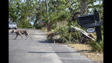 In this photo provided by News21, debris can still be found along the residential streets of Panama City, Fla., Saturday, June 1, 2019, eight months after Hurricane Michael. (Jake Goodrick/News21 via AP)