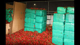 This Thursday, Aug 15, 2019, photo released by the U.S. Customs and Border Protection shows marijuana mixed in with a shipment of jalapeno peppers seized by CBP officers in San Diego's Otay Mesa, Calif. Officials say they seized $2.3 million worth of marijuana at the Southern California port. (U.S. Customs and Border Protection via AP)
