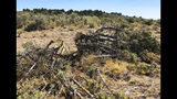 This Aug. 15, 2019 photo shows a juniper tree cut down as part of a giant project to remove junipers encroaching on sagebrush habitat needed by imperiled sage grouse in southwestern Idaho. The Bruneau-Owyhee Sage-Grouse Habitat Project aims to remove junipers on 965 square miles (2,500 square kilometers) of state and federal land in Owyhee County. (AP Photo/Keith Ridler)