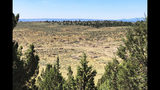 This Aug. 15, 2019 photo shows dozens of juniper trees cut down as part of a giant project to remove junipers encroaching on sagebrush habitat needed by imperiled sage grouse in southwestern Idaho. The Bruneau-Owyhee Sage-Grouse Habitat Project aims to remove junipers on 965 square miles (2,500 square kilometers) of state and federal land in Owyhee County. (AP Photo/Keith Ridler)