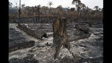 Trees are destroyed after a fire in the Alvorada da Amazonia region in Novo Progresso, Para state, Brazil, Sunday, Aug. 25, 2019. The country's satellite monitoring agency has recorded more than 41,000 fires in the Amazon region so far this year, with more than half of those coming in August alone. (AP Photo/Leo Correa)