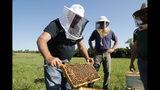 Frank Bartel, de 69 años y quien peleó en Vietnam, trabaja en la cría de abejas en Superior Township, Michigan, el 11 de julio del 2019. Resultados preliminares de programas experimentales indican que la cría de abejas puede ayudar a los veteranos de guerra a lidiar con los trastornos psicológicos que puedan padecer. (AP Photo/Carlos Osorio)