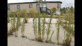 ADVANCE ON THURSDAY, SEPT. 12 FOR USE ANY TIME AFTER 3:01 A.M. SUNDAY SEPT 15 - Weeds grow near an abandoned home at the Denver Meadows Mobile Home and RV Park in Aurora, Colo., on Friday, Aug. 30, 2019. Residents, most of whom have been displaced, tried to buy the park but were unsuccessful. Most of the homes are now abandoned and are slated for demolition as the park closes for possible redevelopment. (AP Photo/Thomas Peipert)