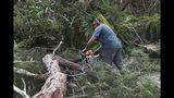 Un hombre emplea una motosierra para cortar un árbol caído que corta el paso en Harrington Sound Road, tras el paso del huracán Humberto, en Smiths, Bermuda, el 19 de septiembre de 2019. (AP Foto/Akil J. Simmons)