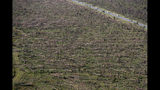 FILE - In this Oct. 12, 2018, file photo, downed trees are seen from the air near Tyndall Air Force Base in the aftermath of Hurricane Michael near Mexico Beach, Fla. The massive storm killed more than two dozen people in northern Florida, destroyed hundreds of homes and brought catastrophic damage to the region's timber industry. (AP Photo/Gerald Herbert, File)