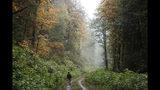 """En esta imagen tomada el 23 de octubre de 2018, Dave Wiens, un biólogo que trabaja para el Servicio Geológico de Estados Unidos, camina a través de un bosque cerca de Corvallis, Oregon, con un dispositivo digital para llamar a búhos que luego serán sacrificados. Wiens, quien trabaja para el Servicio Geológico de Estados Unidos, ahora considera la escopeta """"una herramienta para investigar"""", a partir de la cual el género humano trata de mantener la biodiversidad y equilibrar el ecosistema forestal, combatiendo un depredador. (AP Foto/Ted S. Warren)"""