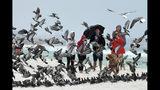 Un grupo de personas observa como un perro asusta a las palomas, en una playa en la isla de Okaloosa, cerca de Fort Walton Beach, Florida, el 18 de octubre de 2019. (Devon Ravine/Northwest Florida Daily News via AP)