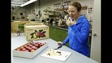 FILE - In this Feb. 12, 2016, file photo, Kate Evans, a lead scientist at Washington State University's Tree Fruit Research & Extension Center in Wenatchee, Wash., tastes a slice of a Cosmic Crisp apple, a new trademarked and focus group-tested apple variety developed by the WSU lab over the last 20 years. The Cosmic Crisp, the first-ever bred in Washington state, will be available beginning Dec. 1 and is expected to be a game changer in the apple industry. Already, growers have planted 12 million Cosmic Crisp apple trees, a sign of confidence in the new variety. (AP Photo/Ted S. Warren, File)