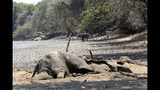 """In this Oct, 27, 2019, photo, the carcass of an Elephant lies on the edges of a sun baked pool that used to be a perennial water supply in Mana Pools National Park, Zimbabwe. Elephants, zebras, hippos, impalas, buffaloes and many other wildlife are stressed by lack of food and water in the park, whose very name comes from the four pools of water normally filled by the flooding Zambezi River each rainy season, and where wildlife traditionally drink. The word """"mana"""" means four in the Shona language. (AP Photo/Tsvangirayi Mukwazhi)"""