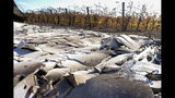 In this Tuesday Nov. 5, 2019, photo, the grape vineyards stand, right, among the destruction of the main building of the Soda Rock Winery in Healdsburg Calif. This Fountaingrove section of Santa Rosa in California's wine country was one of the neighborhoods turned to piles of ash and debris by the now infamous Tubbs Fire of 2017. It had been the most destructive wildfire in California history, until last year, when the Camp Fire ravaged the town of Paradise, to the north, killing 86 people. (AP Photo/Lacy Atkins)