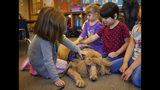 "In this Wednesday, Nov. 6, 2019, photo, kindergartner age children from Healdsburg Elementary School get comfort from ""Rudy,"" a therapeutic dog from Paws of Assistance Loving Support, on their first day back to school since the Kincade Fire in Healdsburg Calif. Many of the children suffer from PTSD symptoms due to the frequency of the fires in the area. (AP Photo/Lacy Atkins)"
