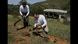 Husband and wife team Paula, left, and Les Ansley, right, collect fresh elephant dung in the Botlierskop Private Game Reserve, near Mossel Bay, South Africa, Tuesday, Oct. 24, 2019. The makers of a South African gin infused with elephant dung swear their use of the animal's excrement is no gimmick. The creators of Indlovu Gin, Les and Paula Ansley, stumbled across the idea a year ago after learning that elephants eat a variety of fruits and flowers and yet digest less than a third of it. (AP Photo/Denis Farrell)
