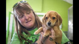 "Mac's Mission animal rescue founder Rochelle Steffen holds a 10-week-old golden retriever puppy with a small tail growing between his eyes, dubbed ""Narwhal,"" Wednesday, Nov. 13, 2019, in Jackson, Mo. The puppy's condition has led to widespread online notoriety and, Steffen said, a flood of adoption offers. (Tyler Graef/The Southeast Missourian via AP)"
