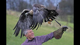 Scottish Liberal Democrat party leader Willie Rennie handles a golden eagle during a political campaign visit to Elite Falconry in Cluny, Kirkcaldy, Scotland, Saturday Nov. 16, 2019. Britain's Brexit is one of the main issues for voters and political parties as the UK goes to the polls in a General Election on Dec. 12. (Andrew Milligan/PA via AP)